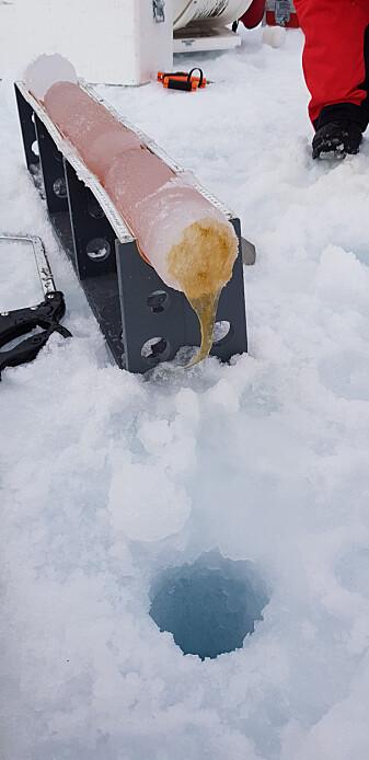 Vår i Arktis og algeoppblomstring under isen. Foto: Antonia Immerz