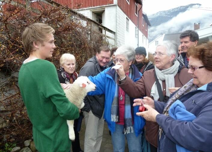 Det treng ikkje bli konflikt mellom reiseliv og lokalsamfunn. Her er turistar i møte med eit lokalt lam. (Foto: Roar W. Vangsnes/Distriktssenteret)