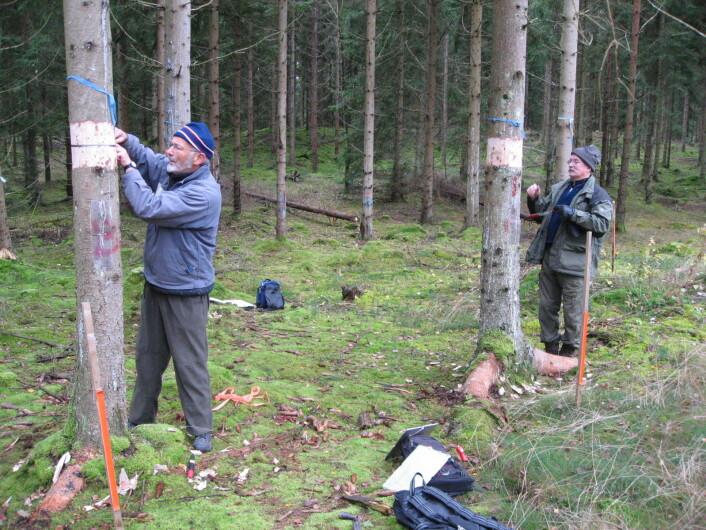 """""""(Foto: Paal Krokene/Norsk institutt for skog og landskap)"""" (Foto: Paal Krokene/Norsk institutt for skog og landskap)"""