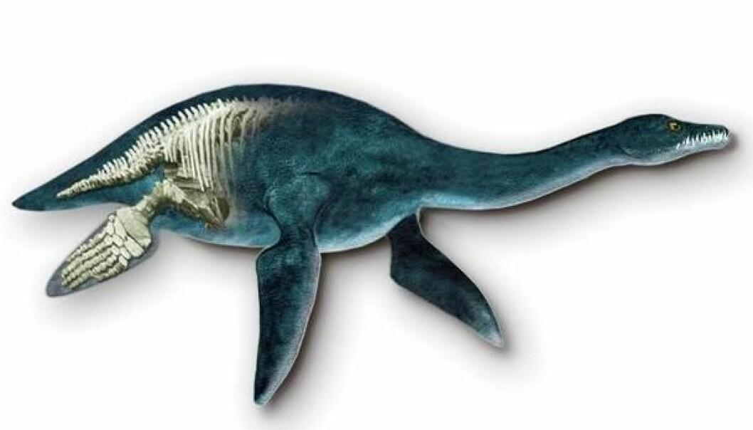 Plesiosaur. (Illustrasjon: Tor Sponga)