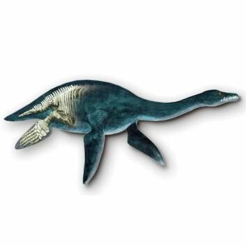 Plesiosaur. (Foto: (Illustrasjon: Tor Sponga))