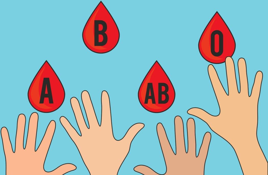 Vi arver blodtype fra foreldrene våre: A, B, AB eller 0. I Norge er blodtype A vanligst.