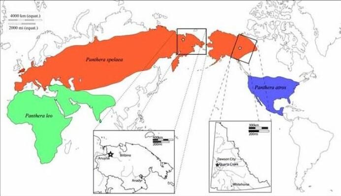 Historisk maksimal utbredelse av huleløver (P. leo spelaea), den amerikanske løven (P. leo atrox) og dagens løver P. leo leo.