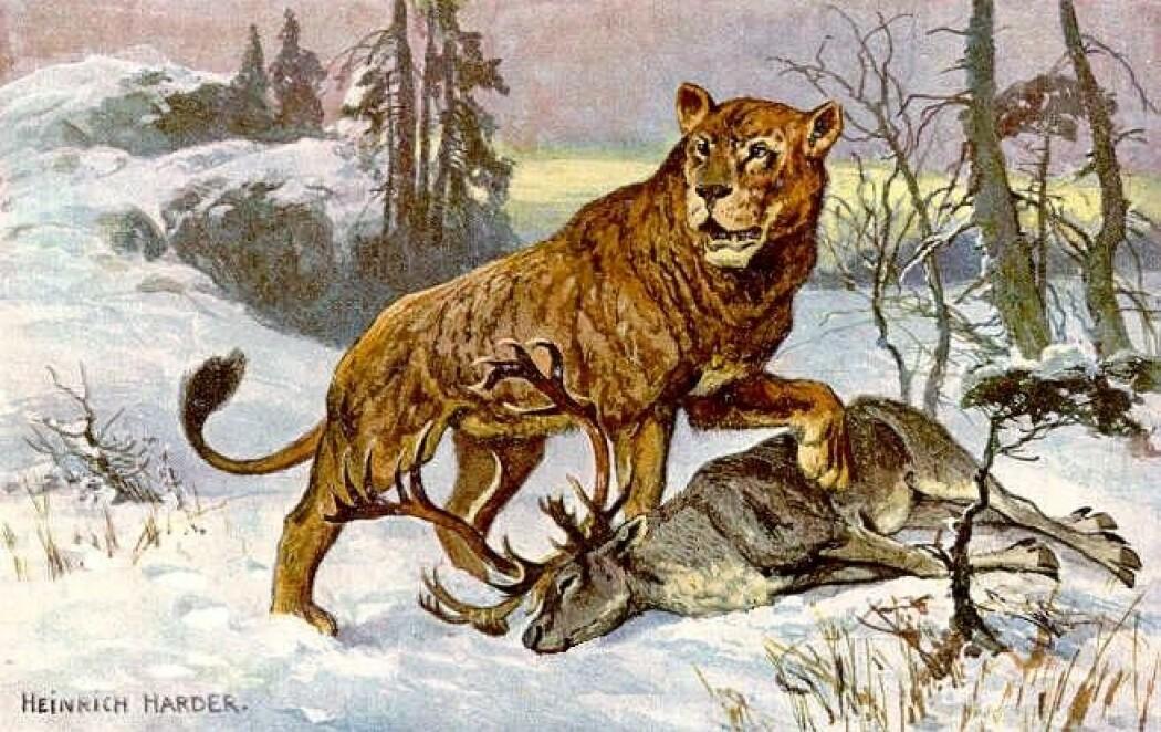 Kunstneren Heinrich Harders fremstilling av en huleløve.