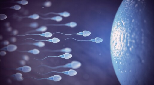 Eggcellen foretrekker noen menns sædceller foran andres, ifølge ny studie