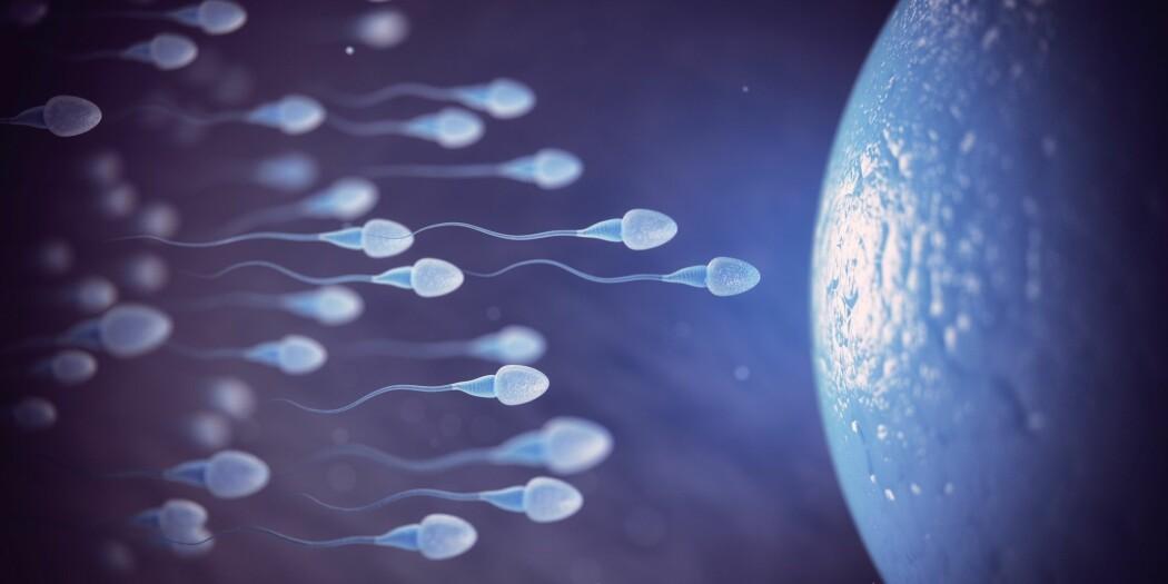 I eksperimenter tiltrakk væske rundt eggcellen flere kjønnsceller fra noen menn sammenlignet med andre.