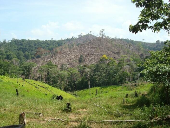 Avskoging nær gården til en påstått narkotikasmugler i Honduras. Narkobaronene hvitvasker penger gjennom å kjøpe opp landområder og starte landbruk. (Foto: David Wrathall)