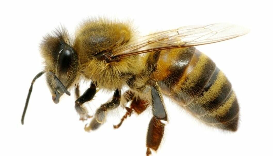 – Derfor går det dårlig med biene