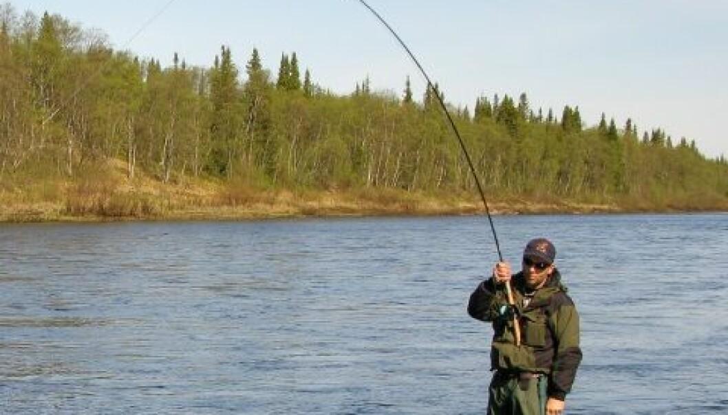 Tiden er over da jakt og fiske var et økonomisk bidrag til familier. Flere steder er det nå først og fremst de store fiskene – trofeene – som tas ut av elvene. (Foto: Shutterstock)