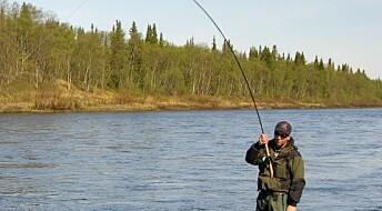 Ørret tåler fang-og-slipp-fiske