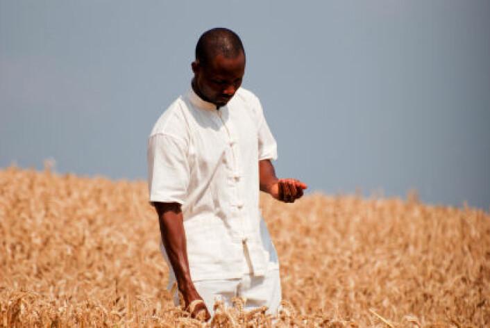 Investering i jordbruket i utviklingsland er den beste måten å sikre nok mat for framtida, mener amerikanske forskere. (Illustrasjonsfoto: iStockphoto)