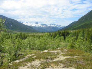 Kystskog i Nordland, like sør for Bodø. (Foto: Aksel Granhus, Skog og landskap)