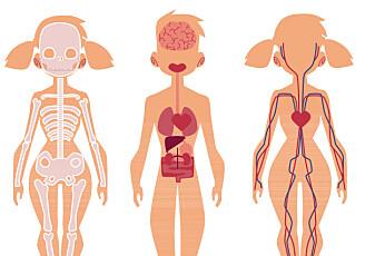 Er vi like på innsiden av kroppen?