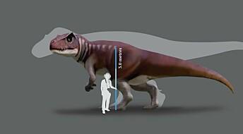Svære, kjøttetende dinosaurer levde i Australia