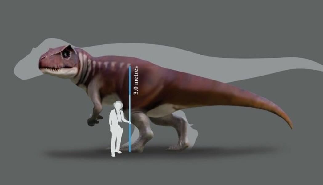 Kayentapus var mindre enn den største Tyrannosaurus rex, men trolig blant de største kjøtteterne i sin tid – 90 millioner år før det mer kjente rovdyret.