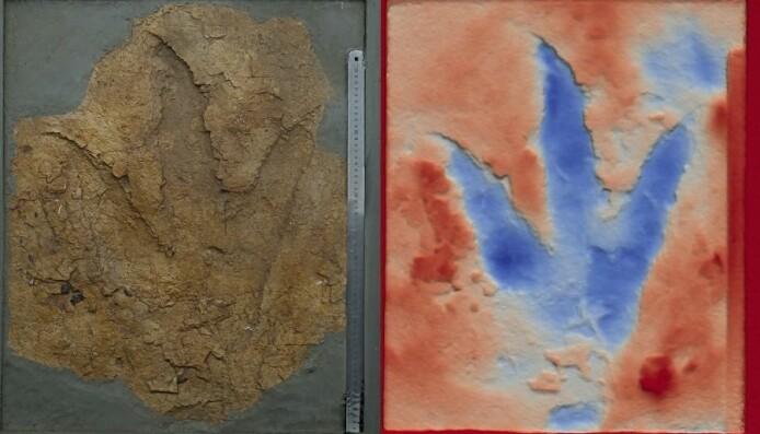 Et dinosaurfotspor fra gruvene i Australia.