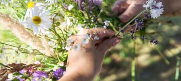 Hvor lett er det å finne sju ville sommerblomster?