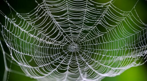 Kan man spise spindelvev?
