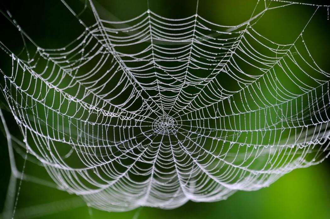 I de siste årene har det begynt å komme flere matvarer med insekter i hyllene. Blir spindelvev den neste nye mattrenden?