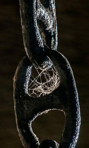 Edderkoppspinn er sterkt som stål og veldig fleksibelt. Men kan du også kaste nettet på grillen?