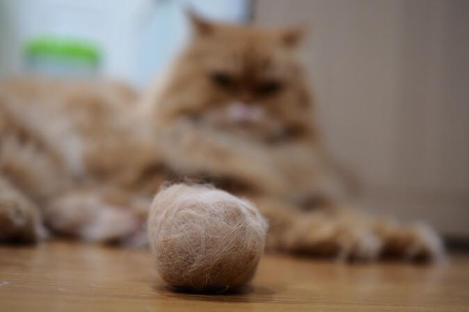 Spindelvev er i utgangspunktet ufordøyelig for mennesker, på samme måte som hår er det for katter. Katter løser problemet ved å gulpe opp hårballer.