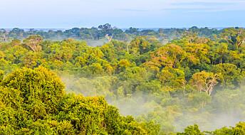 Mangfoldig skog i Amazonas skyldes eldgammelt jordbruk