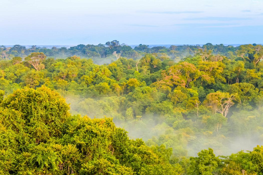Arven etter urfolk bidrar til artsmangfold i regnskogen i Brasil