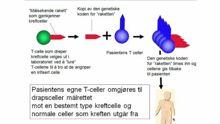 Slik skal kroppens eigne immunceller bli lurt til å drepe kreftceller. (Foto: Johanna Olweus, Universitetet i Oslo)