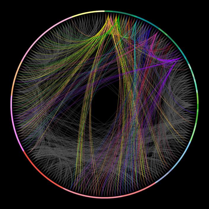 Koblinggsskjema for 215 adskilte regioner av musehjernen. Forbindelser mellom 11 hjernebarkområder er fargekodet, mens resten av forbindelsene er i gråtoner. (Foto: (Figur: Allen Institute for Brain Science))