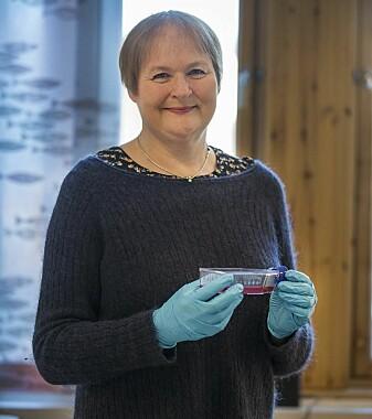 – Ved å se på hvilke gener som slås på når laksen infiseres av virus, finner vi ut hvilke forsvarsmekanismer laksen bruker mot infeksjon, forteller professor Jorunn Jørgensen.