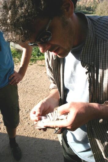 Glenn-Peter Sætre, gruppeleder og professor, tar en blodprøve. (Foto: Tore Oldeide Elgvin)
