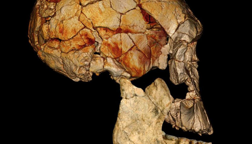 Her er KNM-ER 1470-kraniet, funnet i 1972, kombinert med den nylig oppdagede underkjeven KNM-ER 60000. Forskerne antar at begge tilhører samme art. Det nye funnet kan dermed fortelle forskerne hvordan det komplette kraniet til KNM-ER 1470-kraniet ville ha sett ut. Fred Spoor