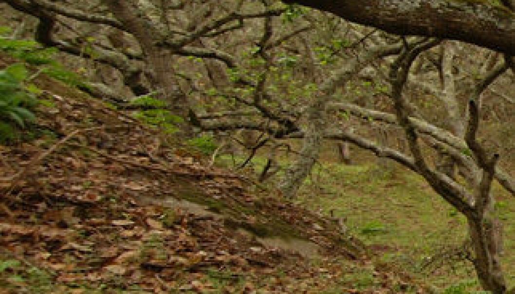 Her er leveområdet til Illacme plenipes: En eikeskog med sandete jordsmonn i California. Dr. Paul Marek et al.
