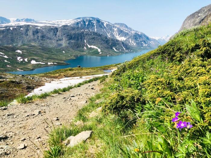 Besseggen. Norges mest brukte sti i fjellet. Men ikke mye folk så langt i sommer.