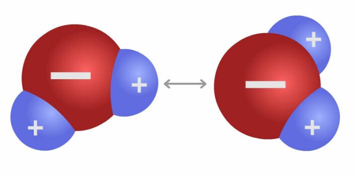 To vannmolekyler. Pluss-ladningene i hydrogenet trekker på minus-ladningen i oksygenet. Dette kalles en hydrogenbinding, og gir både adhesjon og kohesjon i vannet. (Foto: (Figur: Arnfinn Christensen, forskning.no))