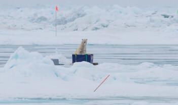 Isbjørn på kontoret og iskrem på søndag