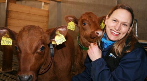 Kalven vokser mer når den får kvalitetstid med mor