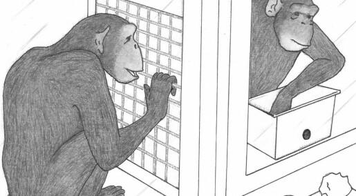 Sjimpanser  sjenerøse