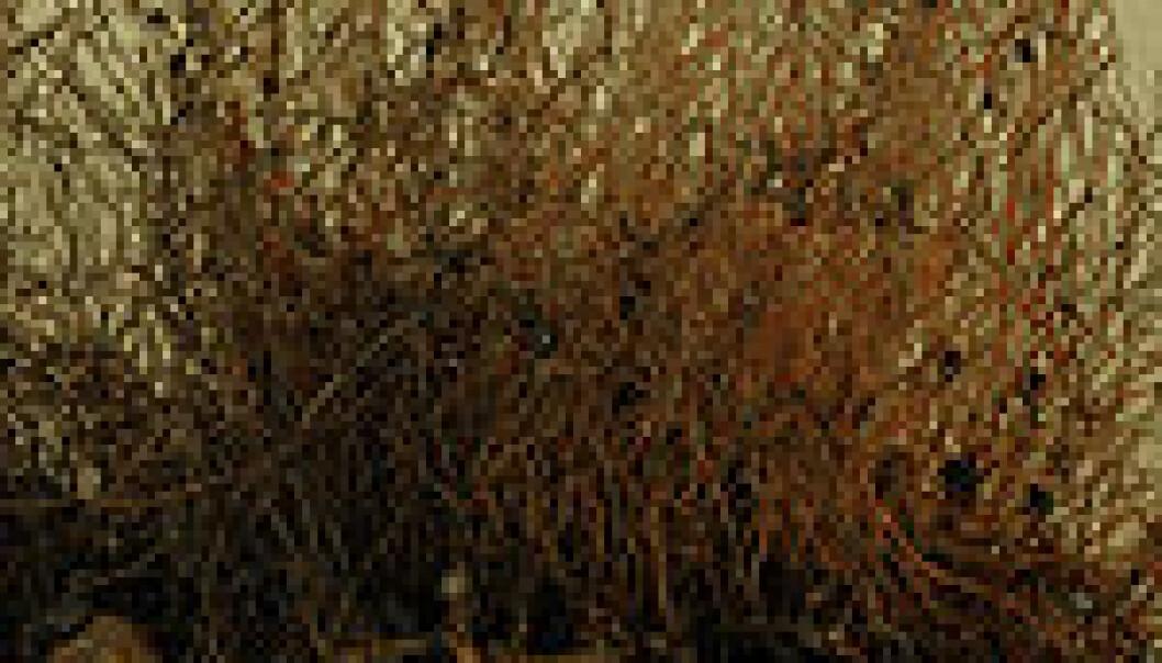 Børstemarken Nicomache lokii danner en tykk matte av sammenfiltrede rør. Gjennom denne står det et stort antall tubeormer (Sclerolinum contortum) som i samarbeid med bakterier kan utnytte den giftige sulfiden nede i bunnen. CGB