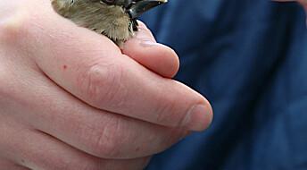 Fugler tilpasser seg Tsjernobyl