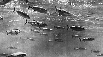 Mange fiskearter kan komme til å slite i framtiden – hvis ikke klimaendringene bremses