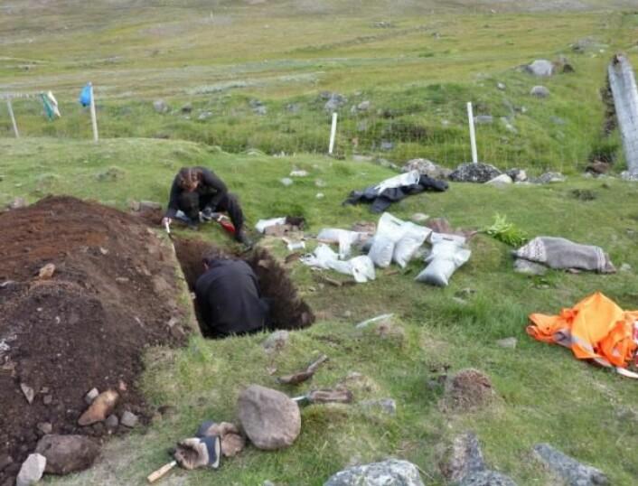 Utgraving i møddingen ved ruingruppe Ø35 på Grønland. Peter Steen Henriksen i hullet, samt arkeolog Caroline Polke Hansgaard. I en av prøveposene på kanten ligger de restene av bygg forskerne fant. (Foto: Inge Kjær Kristensen)