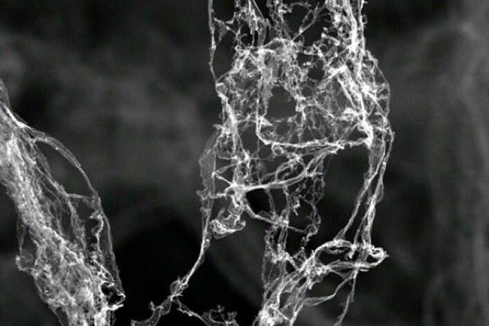 Dette er ikke røyk eller verket til en edderkopp, det er derimot verdens letteste materiale Aerografitt. Det er kullsvart, svamplignende, svært elastisk og ugjennomsiktig. (Foto: TUHH, Karl Schulte/DPA/Press Association Images/DPA/Press Association Images)