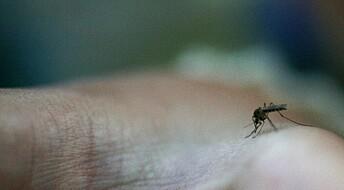 Myggekspert: Trolig mer mygg i år enn normalt