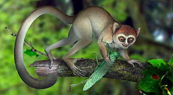 Verdens hittil eldste primatskjelett
