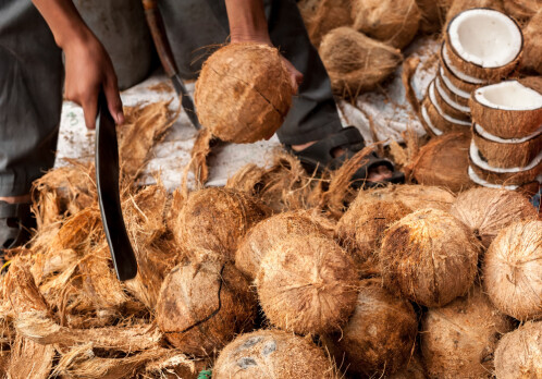 Coconut oil threatens more species than palm oil