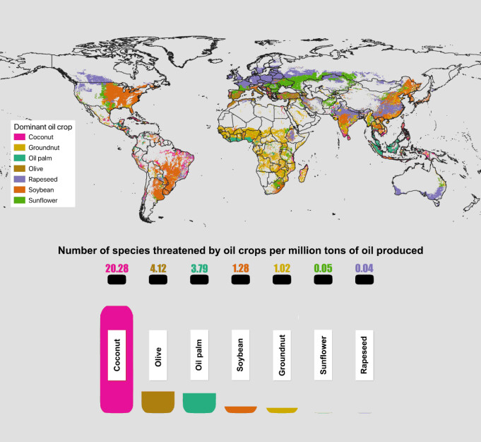 Global map showing the dominant oil crop per grid-cell. Oil levels in the bottles represents the number of species threatened by each oil crop per million tons of oil produced.