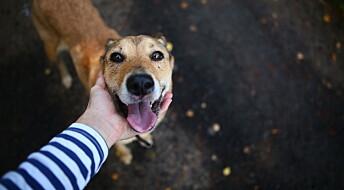 Hvor gammel er hunden din i menneskeår?