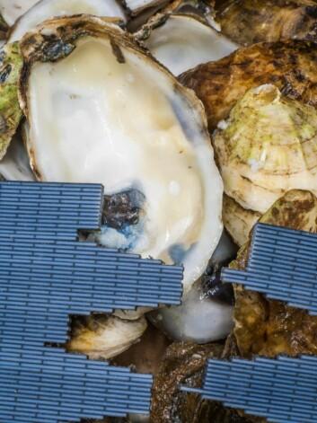 Dette bildet viser den kunstige beinkonstruksjonen (blått) som ligger inntil innsiden av ekte perlemor, et beinlignende materiale som finnes i en rekke bløtdyr. (Foto: Graham Bratzel/Maccachuttes Institute of Technology)