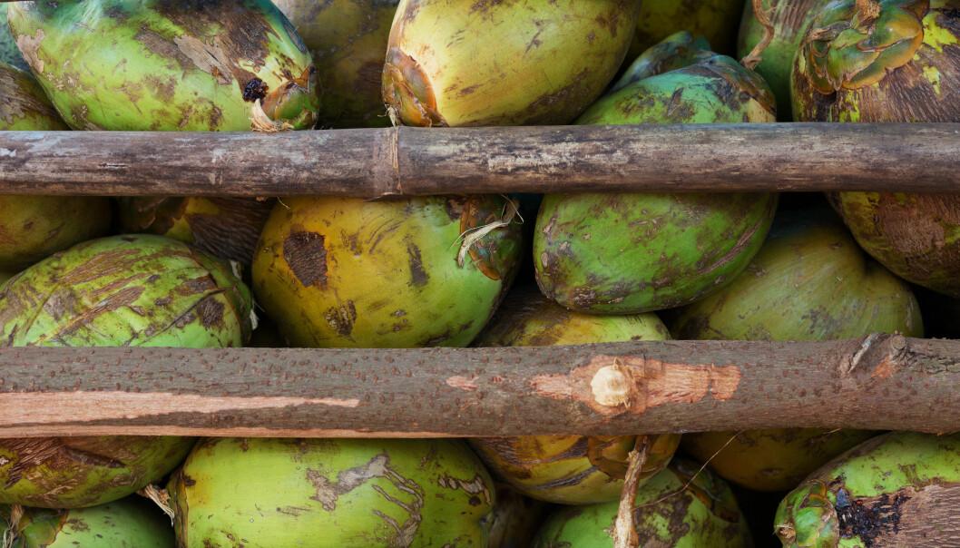 Beregninger viser at produksjonen av kokosnøttolje påvirker 20 truede arter per million liter produsert olje.